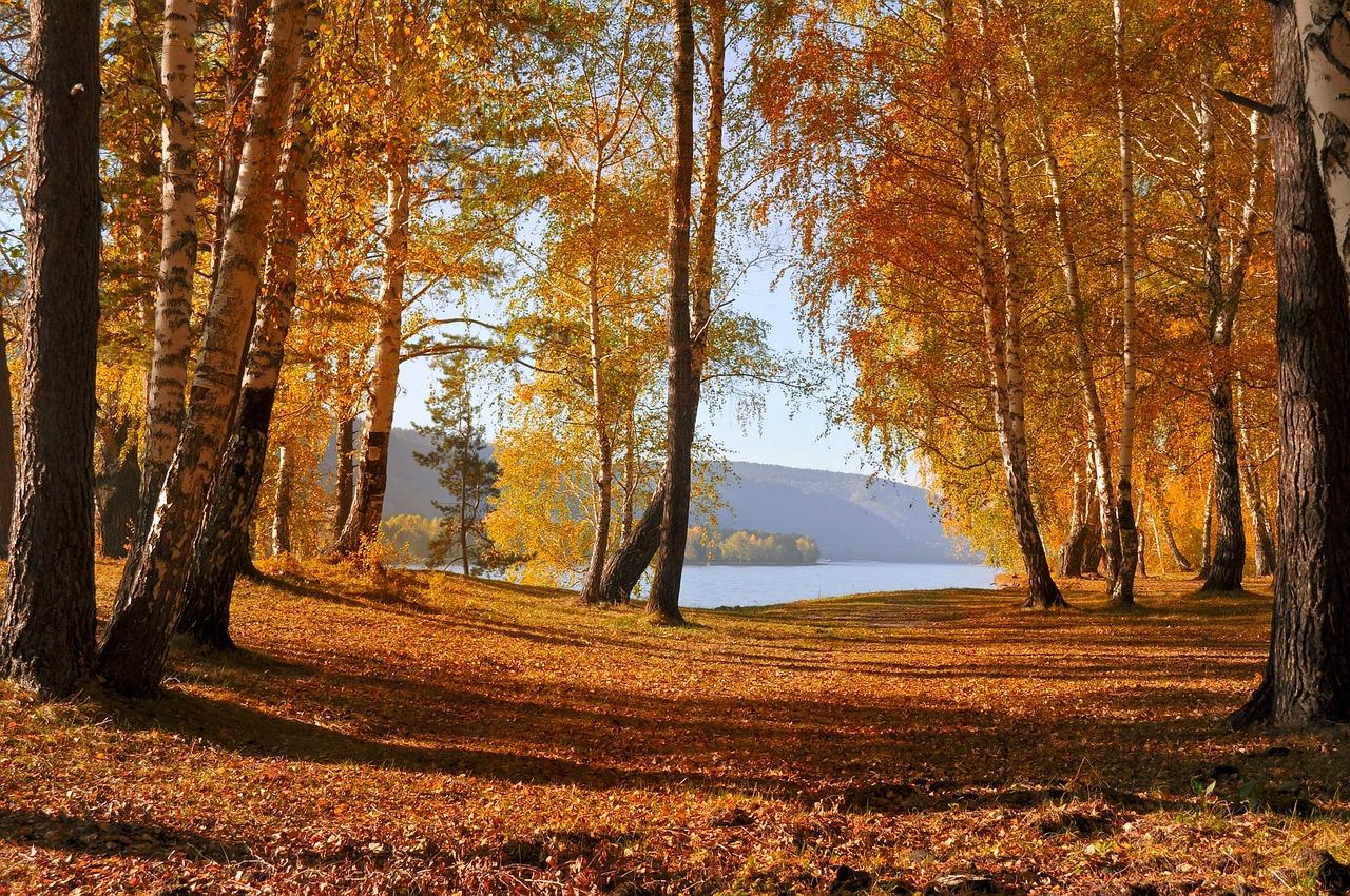 leaves-72908_1280